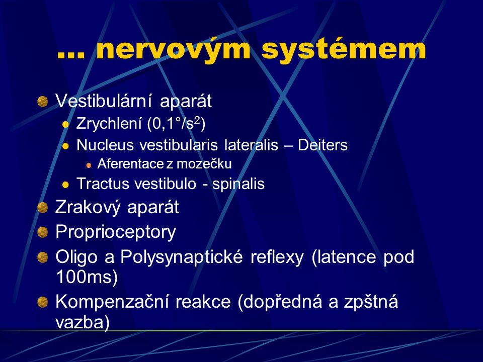 … nervovým systémem Vestibulární aparát Zrychlení (0,1°/s 2 ) Nucleus vestibularis lateralis – Deiters Aferentace z mozečku Tractus vestibulo - spinal