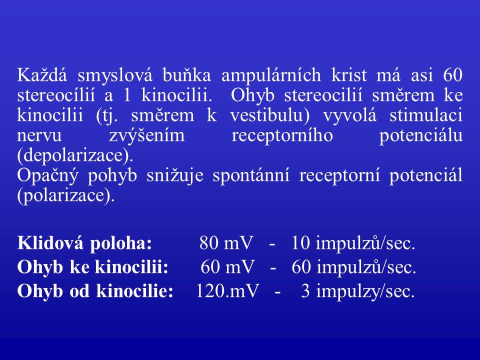 Každá smyslová buňka ampulárních krist má asi 60 stereocílií a 1 kinocilii. Ohyb stereocilií směrem ke kinocilii (tj. směrem k vestibulu) vyvolá stimu