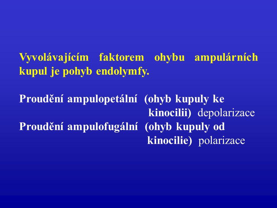Vyvolávajícím faktorem ohybu ampulárních kupul je pohyb endolymfy. Proudění ampulopetální (ohyb kupuly ke kinocilii) depolarizace Proudění ampulofugál