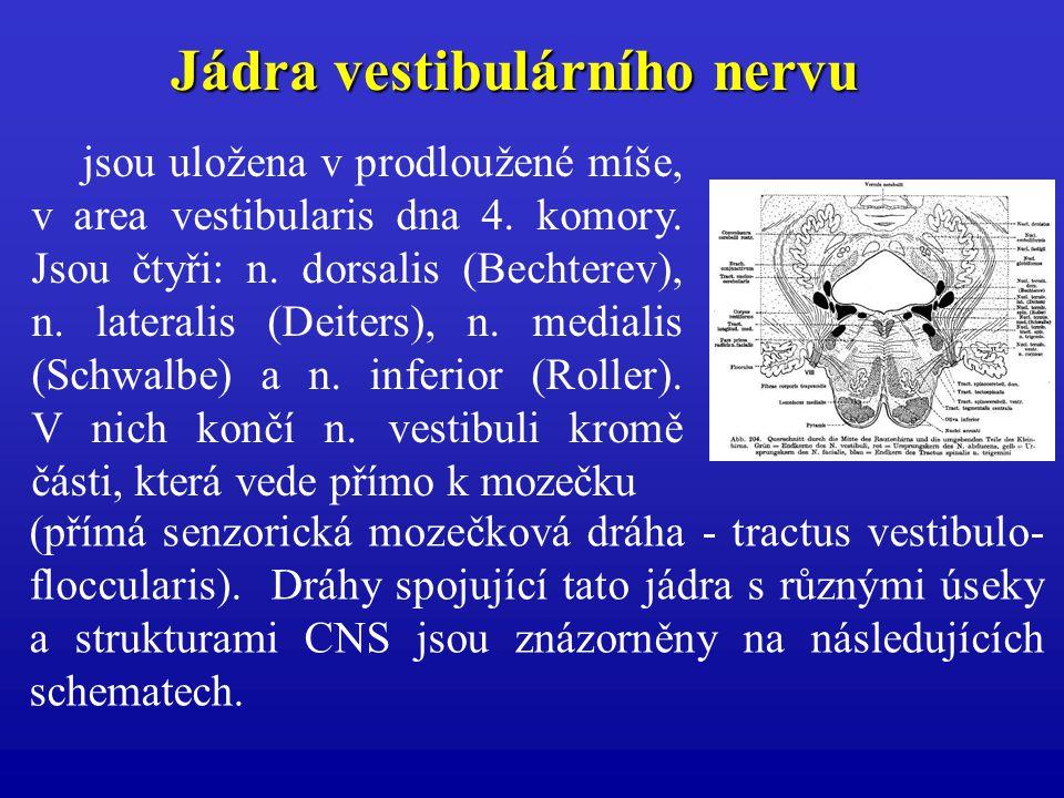 jsou uložena v prodloužené míše, v area vestibularis dna 4. komory. Jsou čtyři: n. dorsalis (Bechterev), n. lateralis (Deiters), n. medialis (Schwalbe