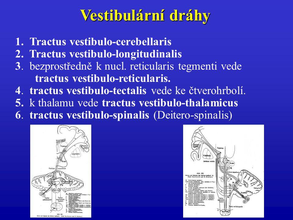 Vestibulární dráhy 1. Tractus vestibulo-cerebellaris 2. Tractus vestibulo-longitudinalis 3. bezprostředně k nucl. reticularis tegmenti vede tractus ve