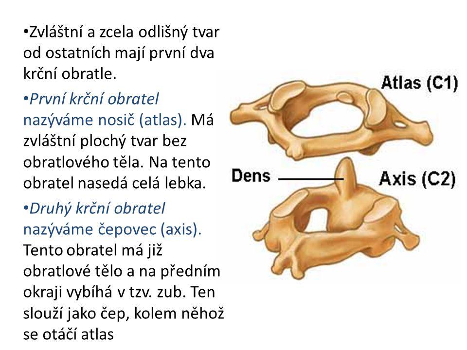 Zvláštní a zcela odlišný tvar od ostatních mají první dva krční obratle. První krční obratel nazýváme nosič (atlas). Má zvláštní plochý tvar bez obrat