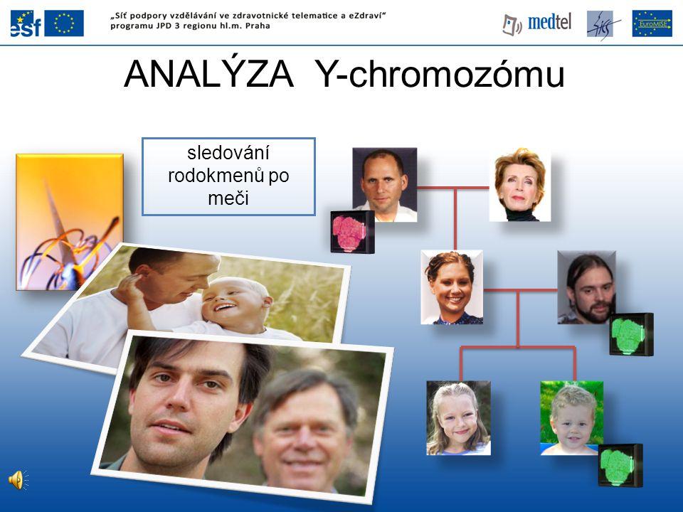 ANALÝZA Y-chromozómu sledování rodokmenů po meči