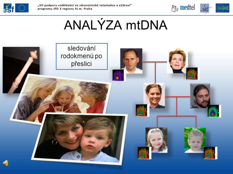 ANALÝZA mtDNA sledování rodokmenů po přeslici