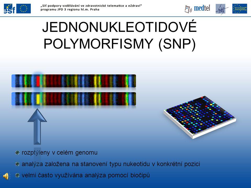 JEDNONUKLEOTIDOVÉ POLYMORFISMY (SNP) rozptýleny v celém genomu analýza založena na stanovení typu nukeotidu v konkrétní pozici velmi často využívána a