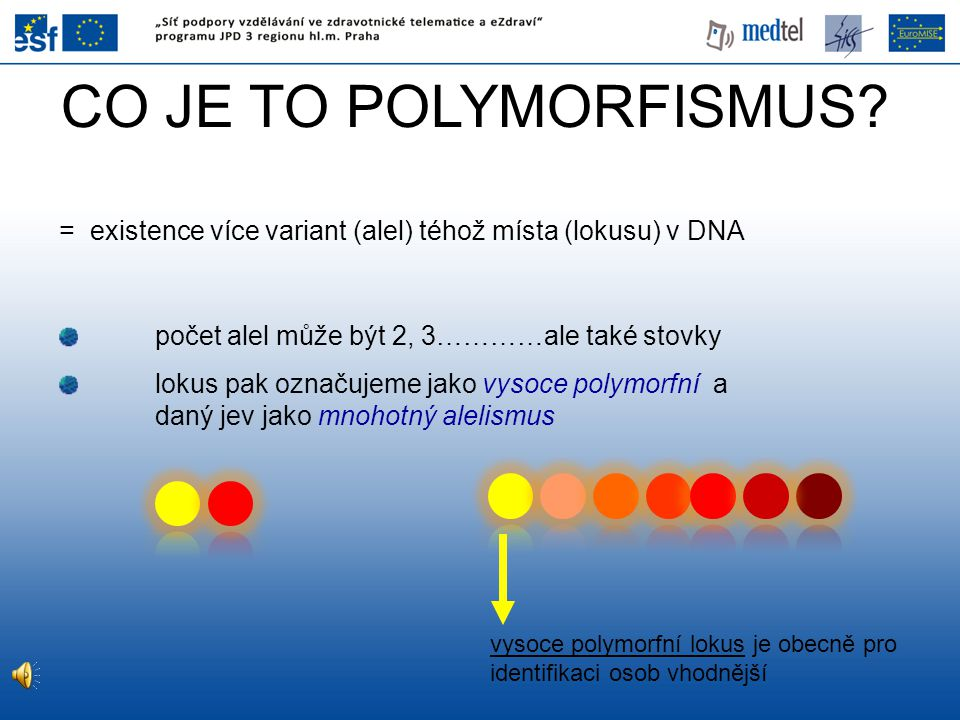 CO JE TO POLYMORFISMUS? = existence více variant (alel) téhož místa (lokusu) v DNA počet alel může být 2, 3…………ale také stovky lokus pak označujeme ja
