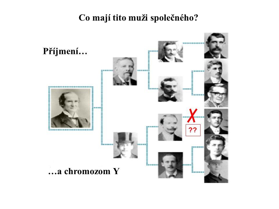 Co mají tito muži společného? ?? Příjmení… …a chromozom Y