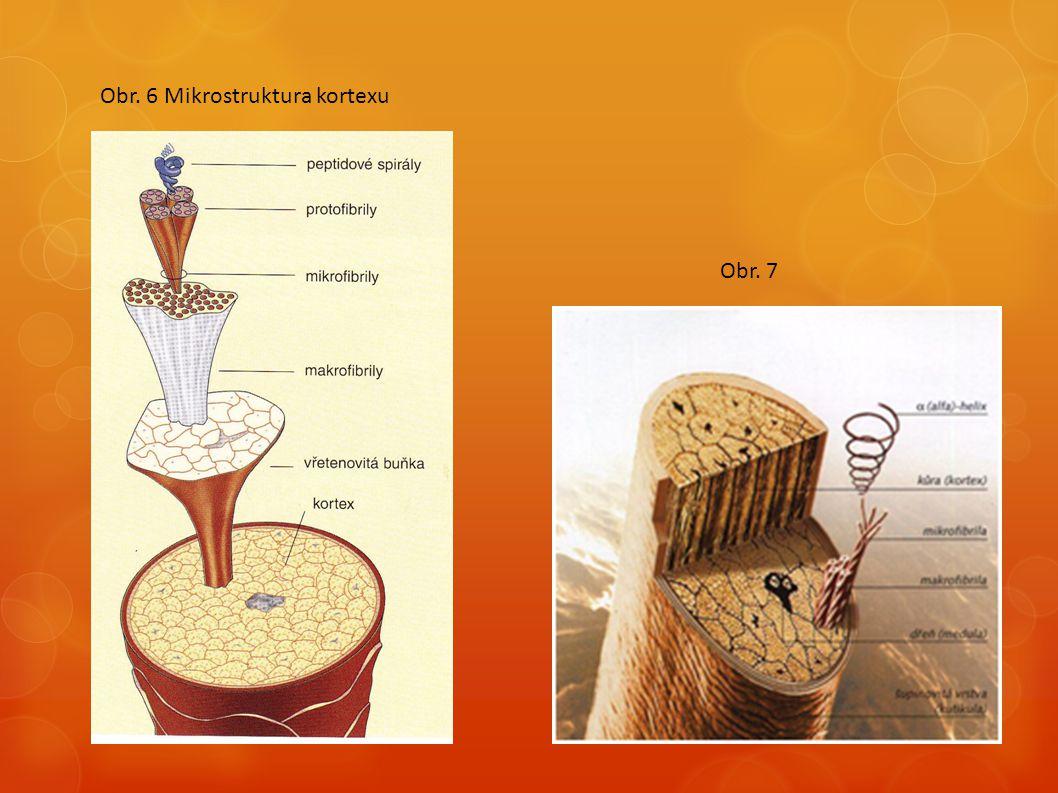 Obr. 6 Mikrostruktura kortexu Obr. 7