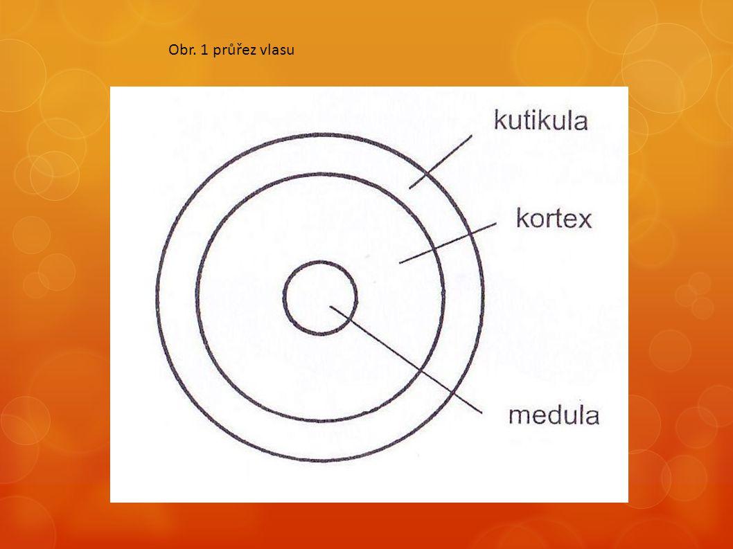  Kortex je nejdůležitější vrstvou vlasu  Určuje barvu vlasu – je zde uložen pigment – melanin  Zajišťuje odolnost proti přetržení a pružnost vlasu  Probíhají zde chemické procesy změny barvy a tvaru vlasu