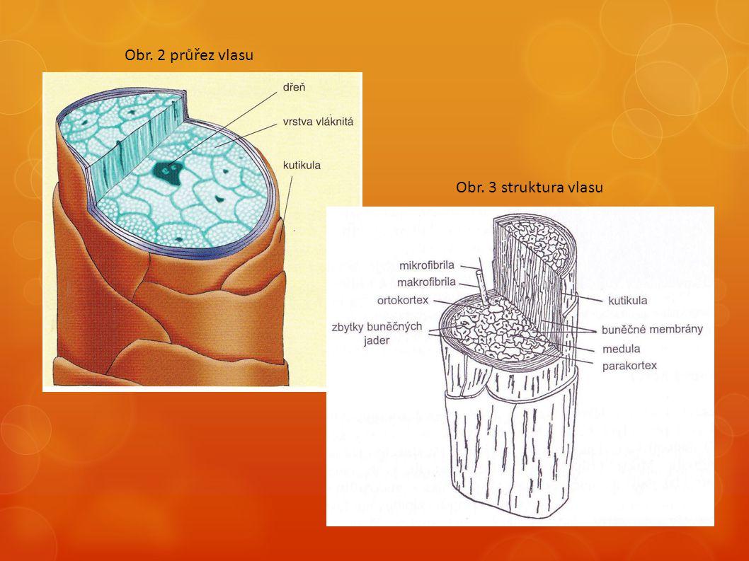 Obr. 2 průřez vlasu Obr. 3 struktura vlasu