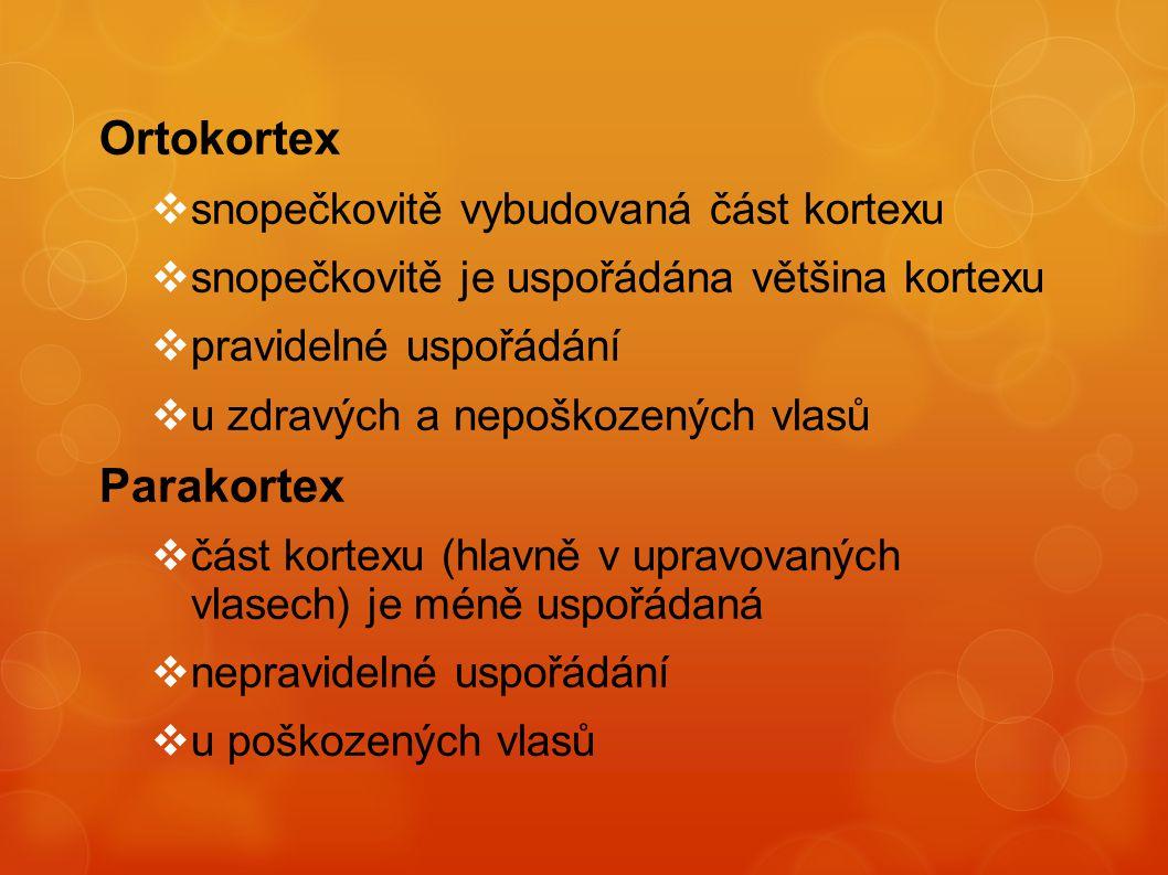 Ortokortex  snopečkovitě vybudovaná část kortexu  snopečkovitě je uspořádána většina kortexu  pravidelné uspořádání  u zdravých a nepoškozených vl