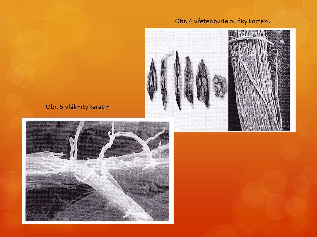  Keratinová vlákna jsou mezi sebou spojená mezibuněčným bílkovinným tmelem (podobně jako u kutikuly)  Tmel zpevňuje stavbu vlasu po fyzikální i chemické stránce  Kortex určuje elastičnost, pevnost a sílu vlasu  Nalézají se zde shluky pigmentových zrn, které vypadají jako tmavé ostrůvky mezi keratinovými vlákny  Kortex je současně nositelem barevnosti vlasu