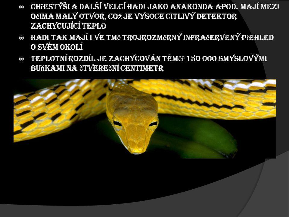  Ch ř estýši a další velcí hadi jako anakonda apod. mají mezi o č ima malý otvor, co ž je vysoce citlivý detektor zachycující teplo  Hadi tak mají i