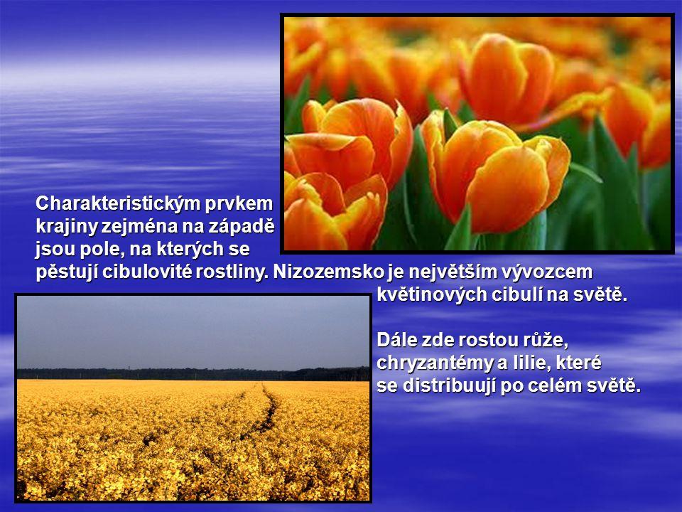 Charakteristickým prvkem krajiny zejména na západě jsou pole, na kterých se pěstují cibulovité rostliny. Nizozemsko je největším vývozcem květinových