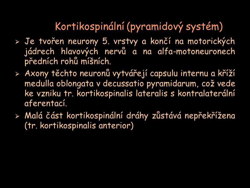 Kortikospinální (pyramidový systém)  Je tvořen neurony 5. vrstvy a končí na motorických jádrech hlavových nervů a na alfa-motoneuronech předních rohů