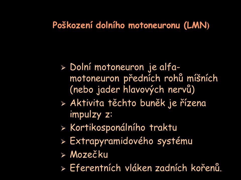 Poškození dolního motoneuronu (LMN )  Dolní motoneuron je alfa- motoneuron předních rohů míšních (nebo jader hlavových nervů)  Aktivita těchto buněk