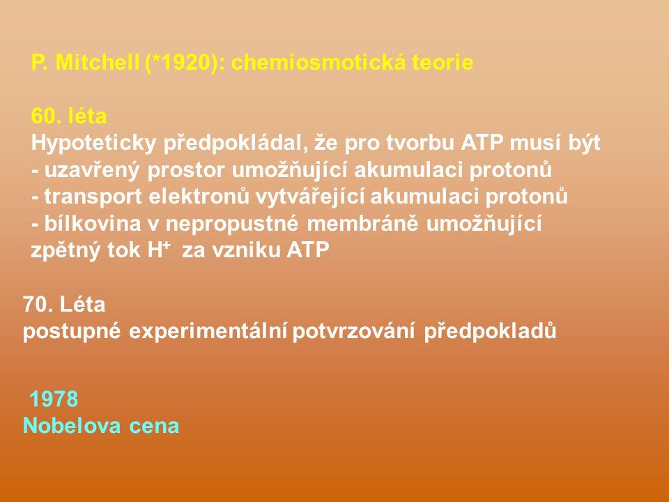 P. Mitchell (*1920): chemiosmotická teorie 60. léta Hypoteticky předpokládal, že pro tvorbu ATP musí být - uzavřený prostor umožňující akumulaci proto