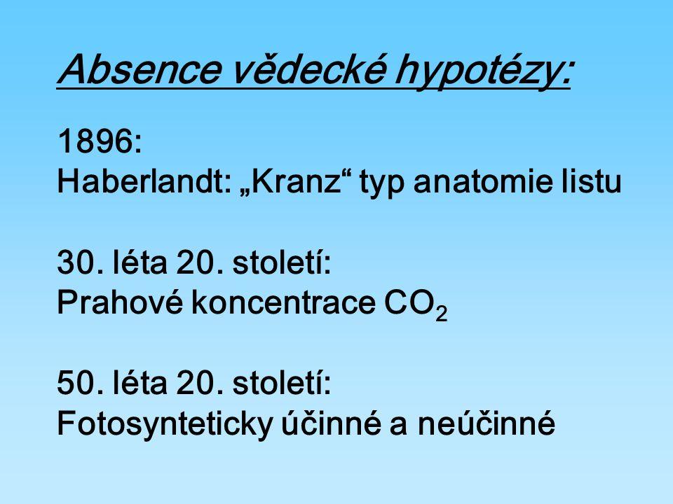 "Absence vědecké hypotézy: 1896: Haberlandt: ""Kranz typ anatomie listu 30."