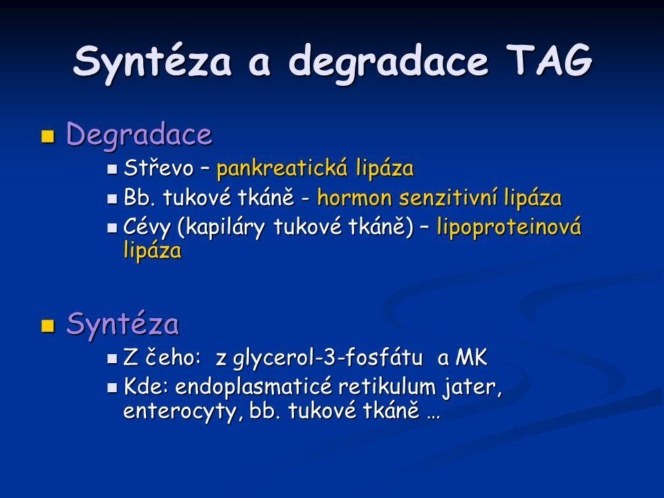 Syntéza a degradace TAG Degradace Degradace Střevo – pankreatická lipáza Střevo – pankreatická lipáza Bb.