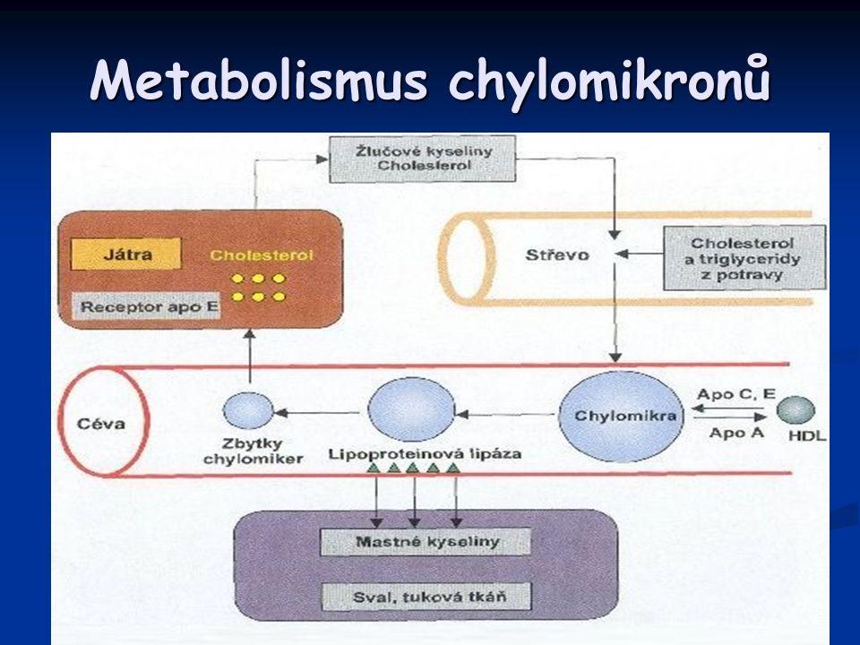 Buněčné lipidy Dva typy tuků v buňkách: Dva typy tuků v buňkách: Strukturální lipidy Strukturální lipidy Součásti membrán a jiných částí buněk Součásti membrán a jiných částí buněk Při hladovění se zachovávají Při hladovění se zachovávají Neutrální tuk Neutrální tuk Skladovaný v tukových buňkách do zásob (aktivní dynamická tkáň) Skladovaný v tukových buňkách do zásob (aktivní dynamická tkáň) Mobilizován při hladovění Mobilizován při hladovění Muži – 15 %, ženy - 20 % Muži – 15 %, ženy - 20 % Hnědý tuk Hnědý tuk Zaujímá malé procento z celkových zásob Zaujímá malé procento z celkových zásob Novorozenci – uložen mezi lopatkami v zátylku, podél velkých cév v hrudníku a břiše a v jiných oblastech Novorozenci – uložen mezi lopatkami v zátylku, podél velkých cév v hrudníku a břiše a v jiných oblastech Buňky hnědého typu – sympatická inervace, mnoho mitochondrií Buňky hnědého typu – sympatická inervace, mnoho mitochondrií Vytváří více tepla – stimulace sympatiku —› noradrenalin —> î lipolýza a oxidace MK —› zvýšená produkce tepla bez významné tvorby ATP Vytváří více tepla – stimulace sympatiku —› noradrenalin —> î lipolýza a oxidace MK —› zvýšená produkce tepla bez významné tvorby ATP Stimulace – chlad, příjem potravy Stimulace – chlad, příjem potravy