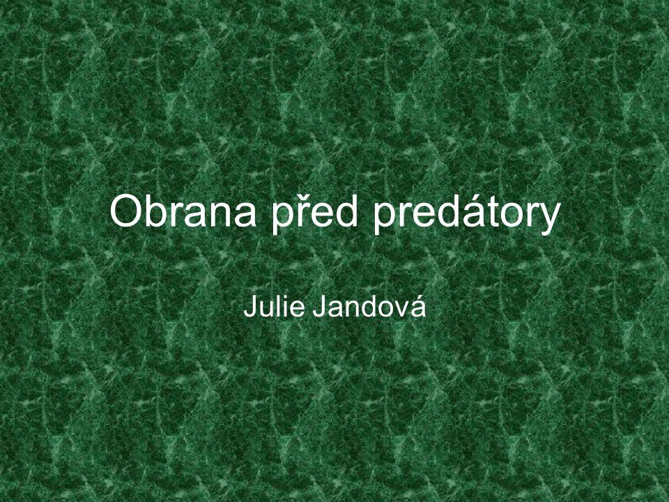 Obrana před predátory Julie Jandová