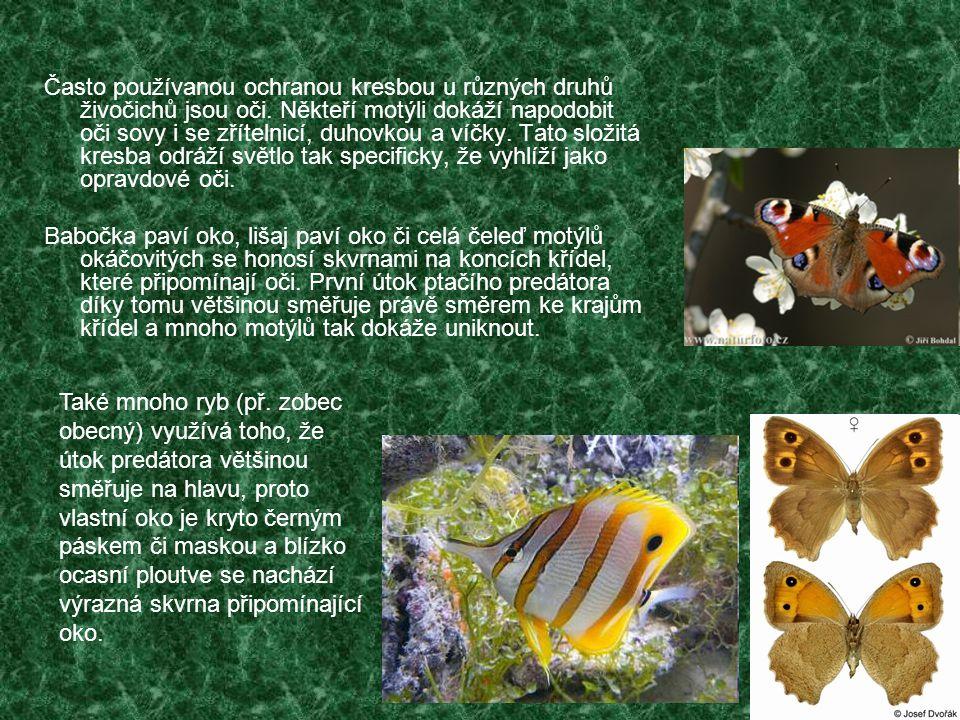 Často používanou ochranou kresbou u různých druhů živočichů jsou oči. Někteří motýli dokáží napodobit oči sovy i se zřítelnicí, duhovkou a víčky. Tato