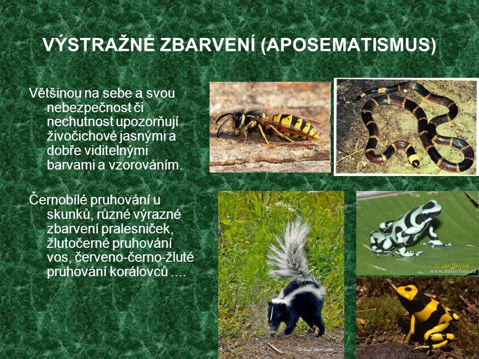 VÝSTRAŽNÉ ZBARVENÍ (APOSEMATISMUS) Většinou na sebe a svou nebezpečnost či nechutnost upozorňují živočichové jasnými a dobře viditelnými barvami a vzo
