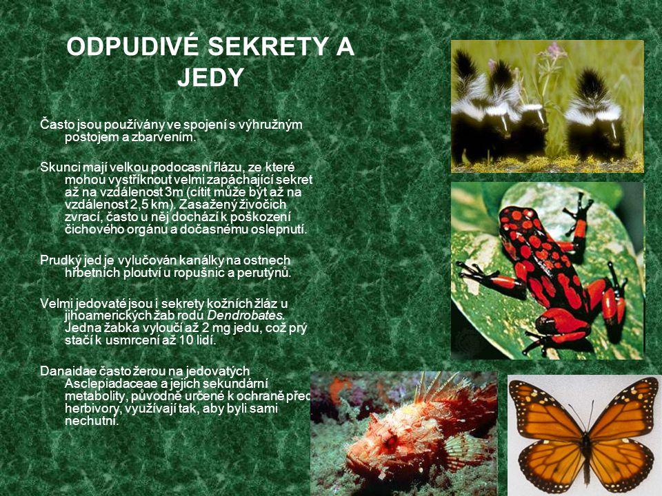 MÜLLERIÁNSKÉ MIMIKRY Více nechutných či jedovatých druhů má podobné výstražné zbarvení, takže predátorovi stačí pouze jeden pokus, aby se začal vyhýbat všem podobně vypadajícím živočichům.