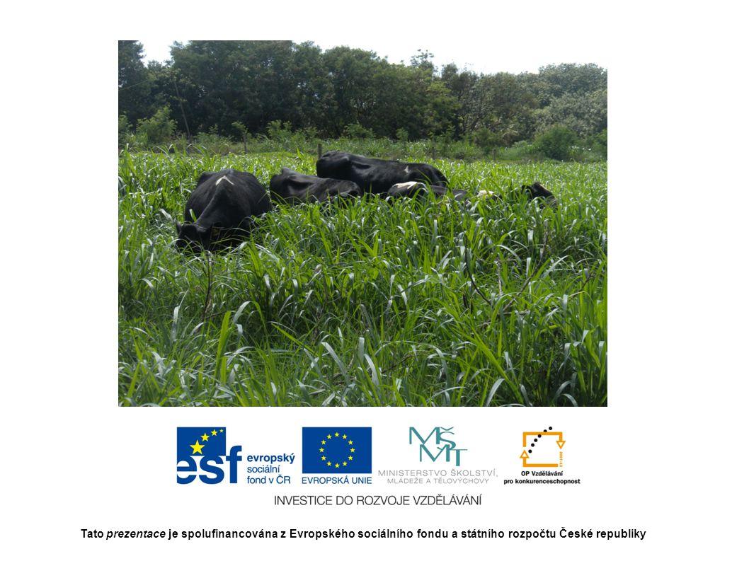 Doba realizace 1.9.2012 až 31.8.2014 Tato prezentace je spolufinancována z Evropského sociálního fondu a státního rozpočtu České republiky