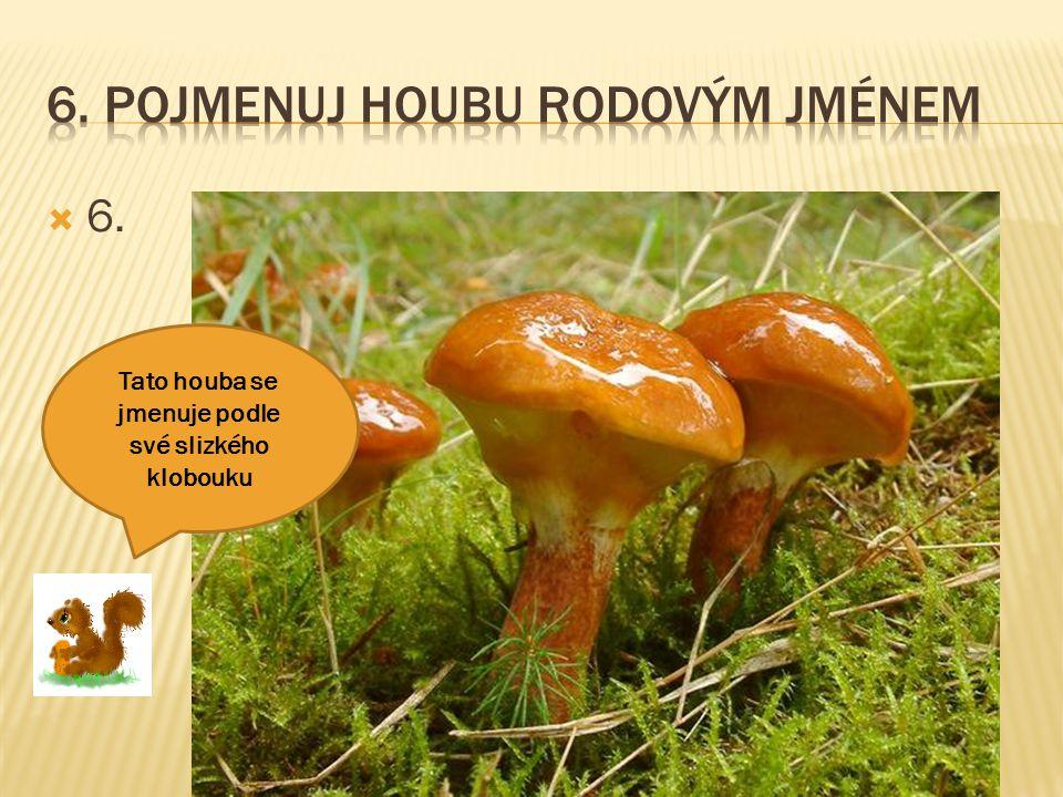  6. Tato houba se jmenuje podle své slizkého klobouku