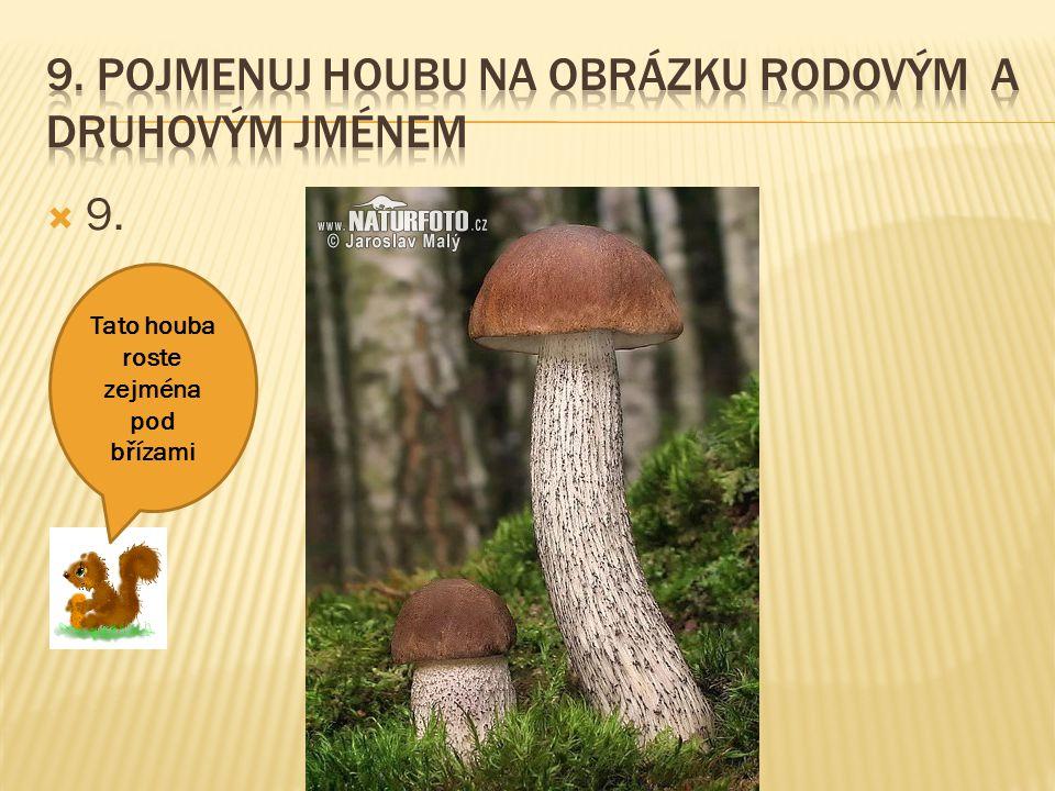  9. Tato houba roste zejména pod břízami
