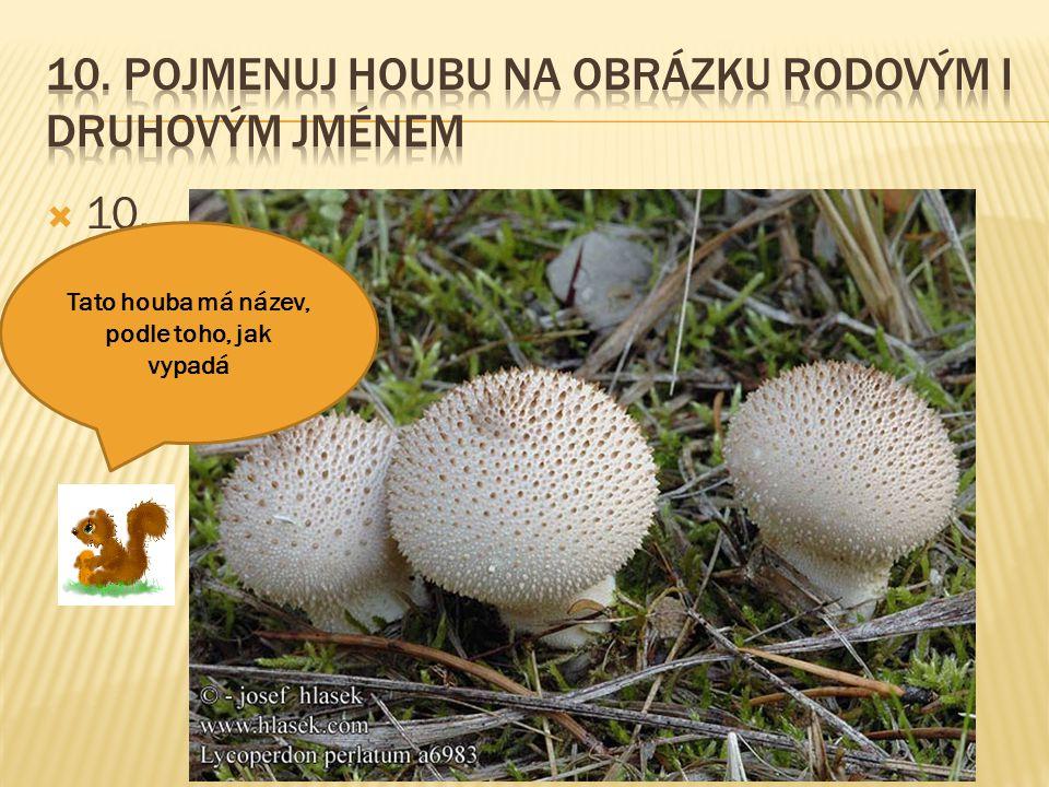  10. Tato houba má název, podle toho, jak vypadá