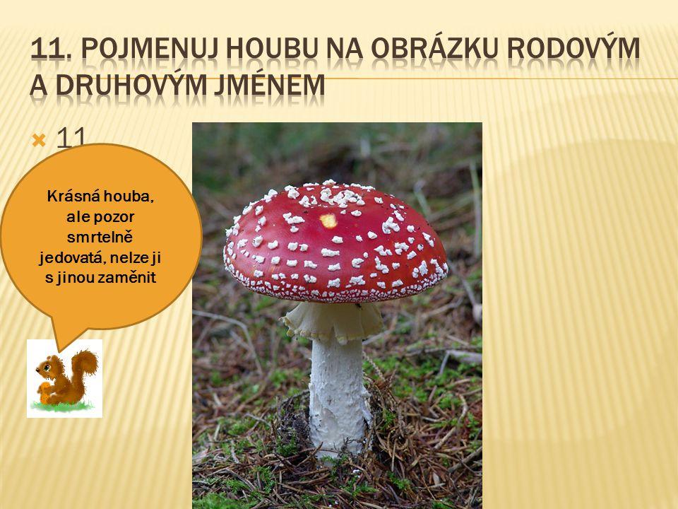  11. Krásná houba, ale pozor smrtelně jedovatá, nelze ji s jinou zaměnit