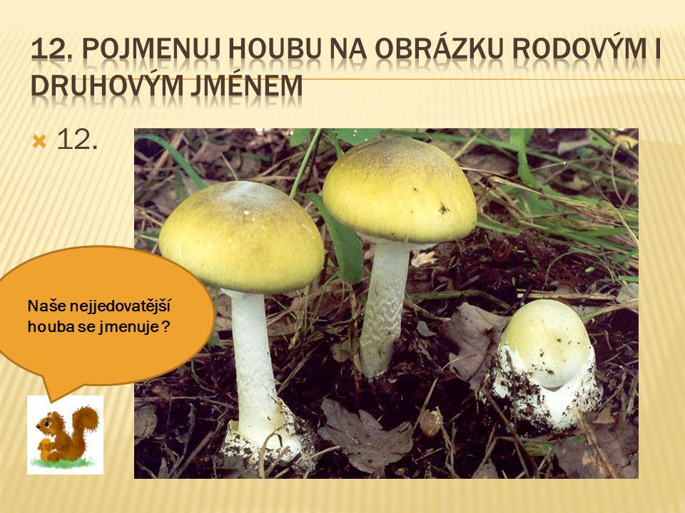  12. Naše nejjedovatější houba se jmenuje ?