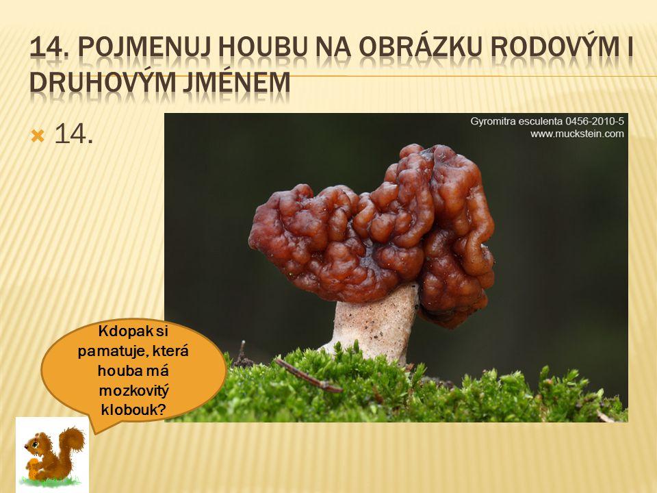  14. Kdopak si pamatuje, která houba má mozkovitý klobouk?