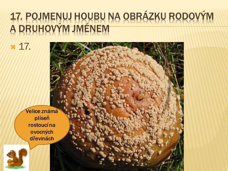  17. Velice známá plíseň rostoucí na ovocných dřevinách