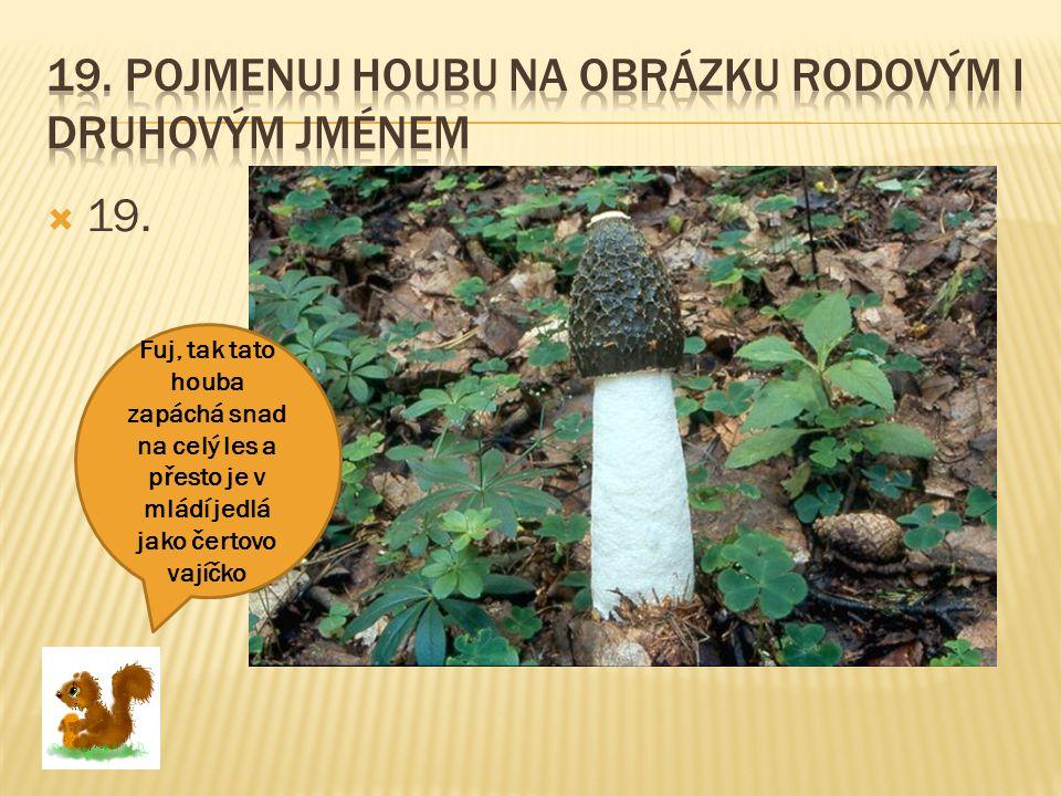  19. Fuj, tak tato houba zapáchá snad na celý les a přesto je v mládí jedlá jako čertovo vajíčko