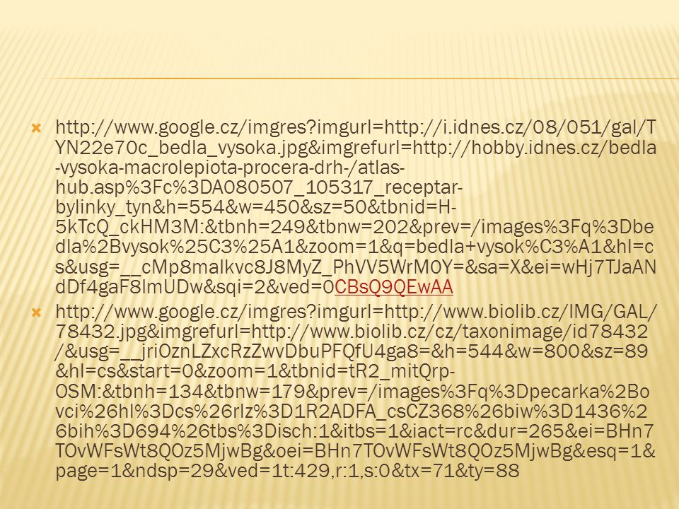  http://www.google.cz/imgres?imgurl=http://i.idnes.cz/08/051/gal/T YN22e70c_bedla_vysoka.jpg&imgrefurl=http://hobby.idnes.cz/bedla -vysoka-macrolepio