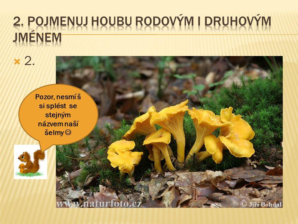  13. Tato houba roní mléko a jmenuje se podle svého narezlého klobouku