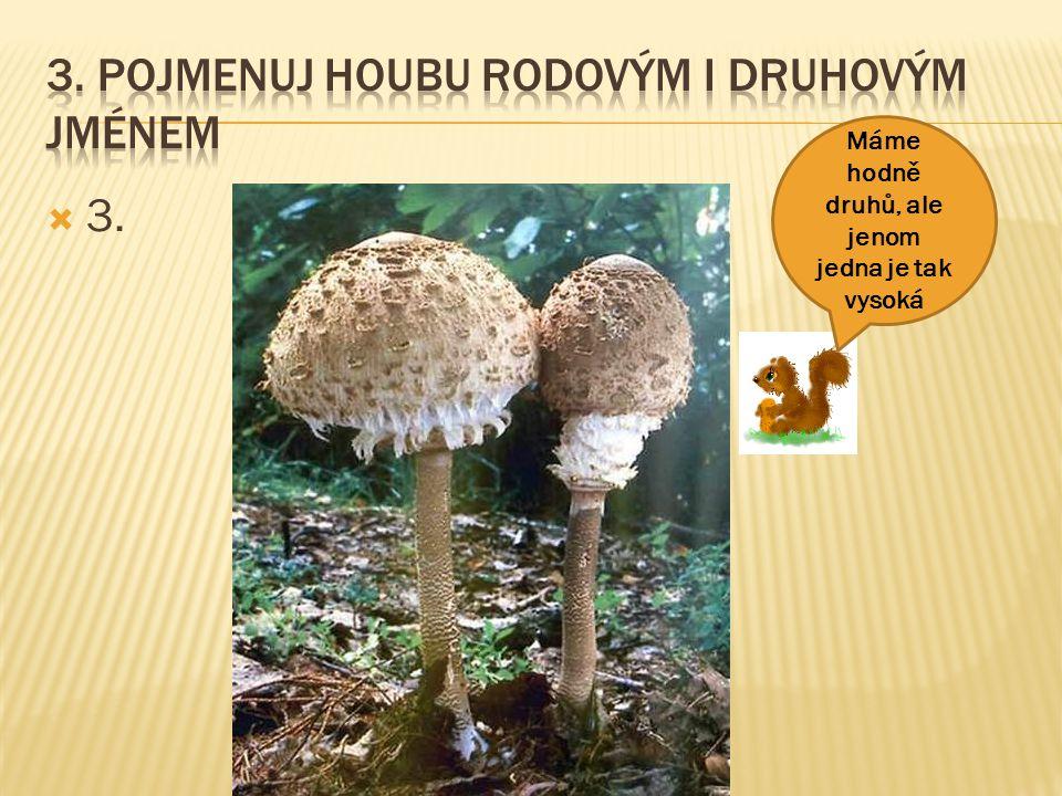 44 Pozor, snadno se splete tato výtečná houba s jedovatou muchomůrkou