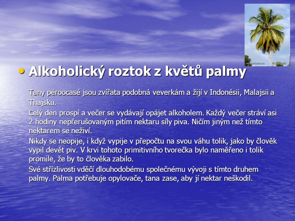 Alkoholický roztok z květů palmy Alkoholický roztok z květů palmy Tany péroocasé jsou zvířata podobná veverkám a žijí v Indonésii, Malajsii a Thajsku.