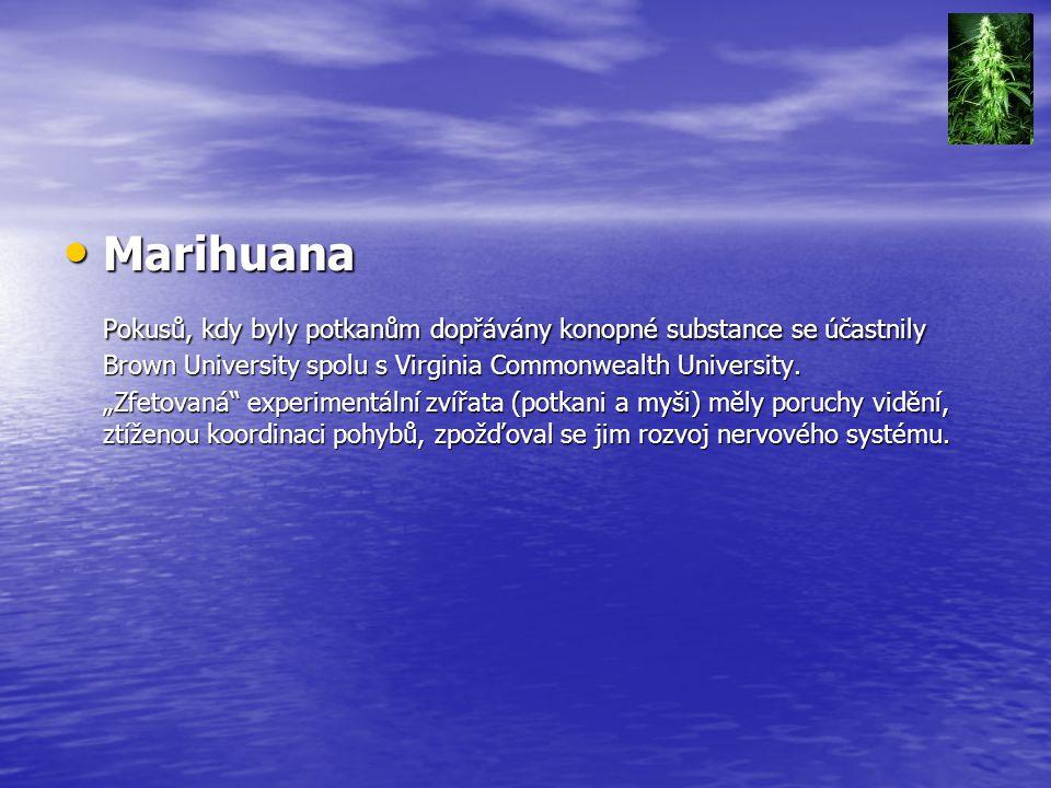 """Marihuana Marihuana Pokusů, kdy byly potkanům dopřávány konopné substance se účastnily Brown University spolu s Virginia Commonwealth University. """"Zfe"""