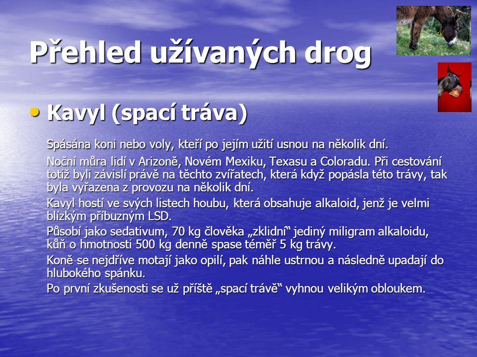 Přehled užívaných drog Kavyl (spací tráva) Kavyl (spací tráva) Spásána koni nebo voly, kteří po jejím užití usnou na několik dní. Noční můra lidí v Ar