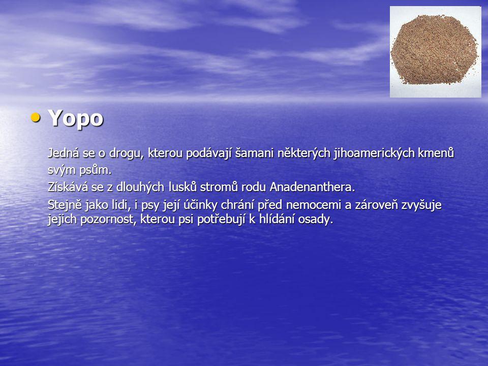 Yopo Yopo Jedná se o drogu, kterou podávají šamani některých jihoamerických kmenů svým psům. Získává se z dlouhých lusků stromů rodu Anadenanthera. St