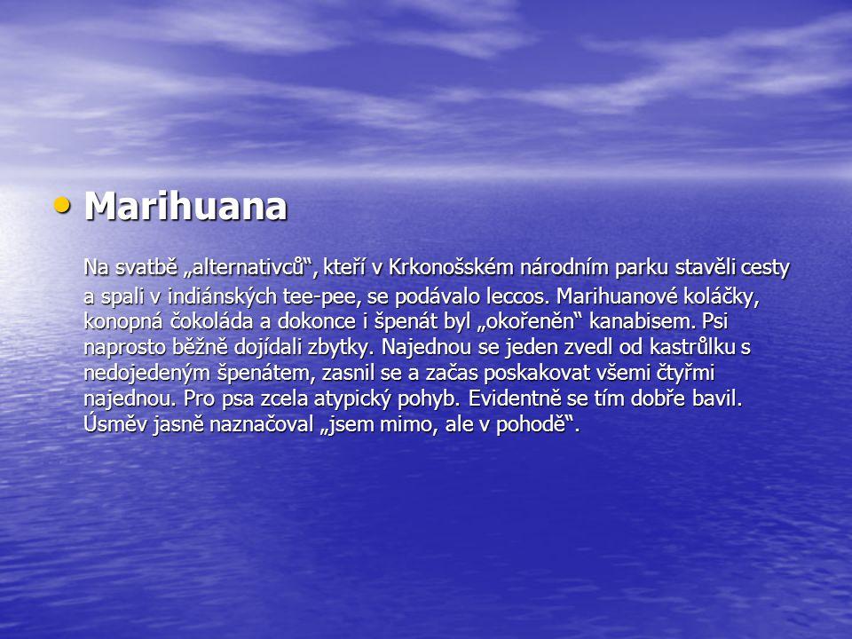 """Marihuana Marihuana Na svatbě """"alternativců"""", kteří v Krkonošském národním parku stavěli cesty a spali v indiánských tee-pee, se podávalo leccos. Mari"""
