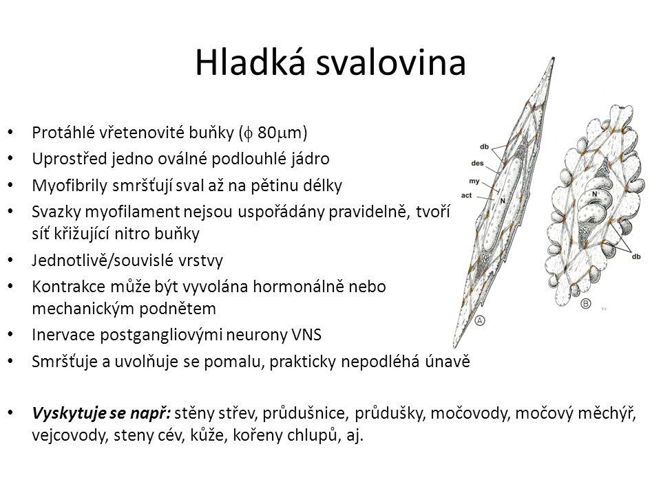 Zdroje: Čihák, R.(2011). Anatomie 1. Praha: Grada.