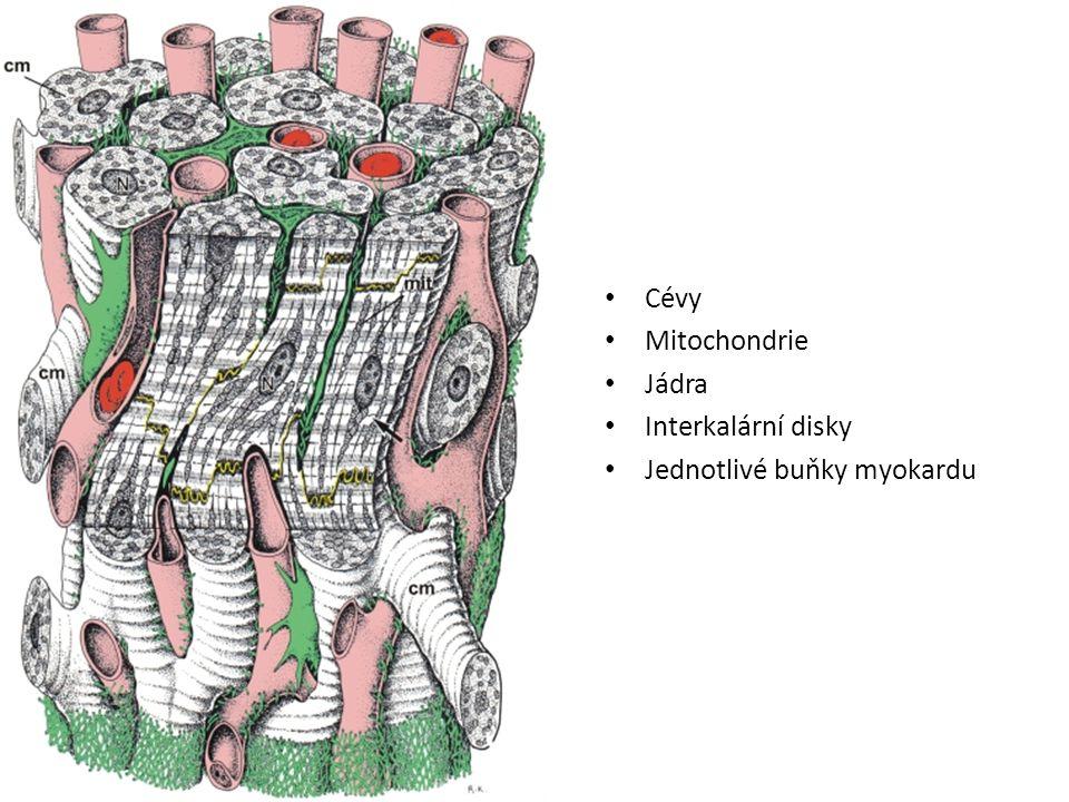 Příčně pruhovaná svalovina - kosterní Hybná motorická složka pohybového systému Chemická E na mechanickou E Inervace mozkomíšními nervy Základní stavební jednotkou – svalové vlákno s myofibrilami Funkční jednotkou je motorická jednotka (skupina svalových vláken inervovány jedním motoneuronem
