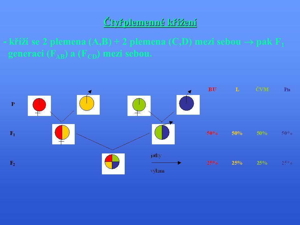 Pokračování tříplemenného křížení - na F 2 generaci se připařuje čtvrté plemeno.