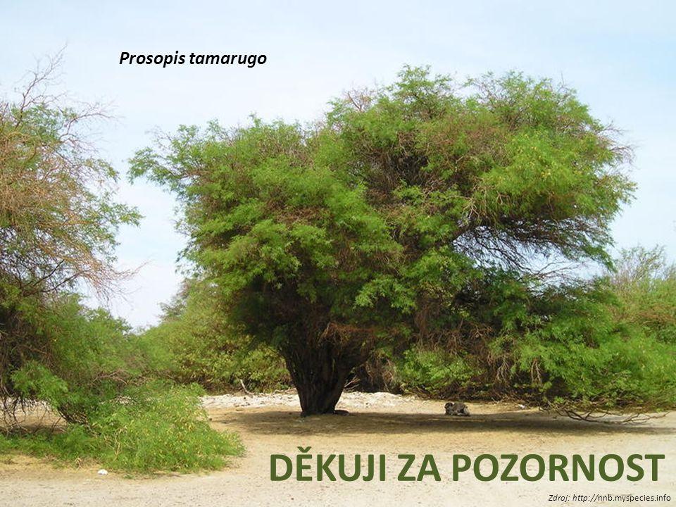 DĚKUJI ZA POZORNOST Zdroj: http://nnb.myspecies.info Prosopis tamarugo