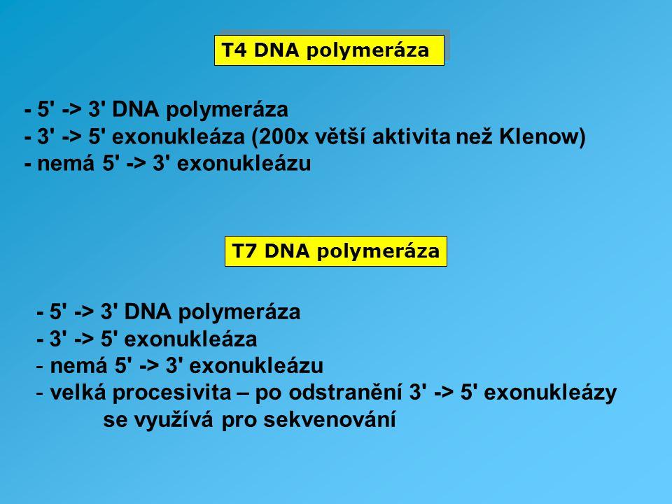 T4 DNA polymeráza T7 DNA polymeráza - 5' -> 3' DNA polymeráza - 3' -> 5' exonukleáza (200x větší aktivita než Klenow) - nemá 5' -> 3' exonukleázu - 5'